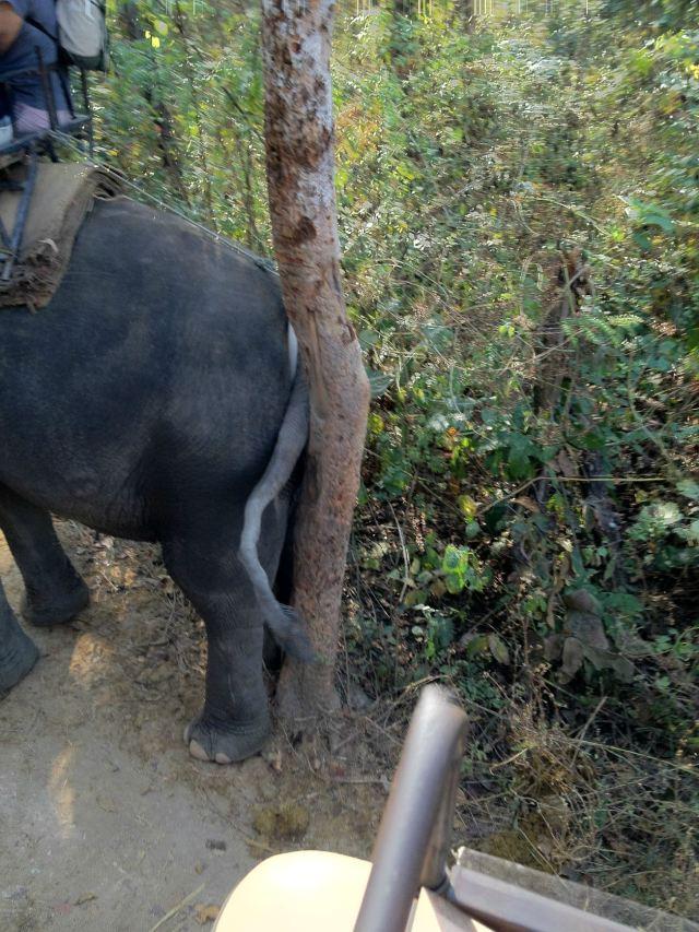 大象好可爱哦~走到哪有树都要用身体的部位去磨磨擦擦.搔痒痒呢