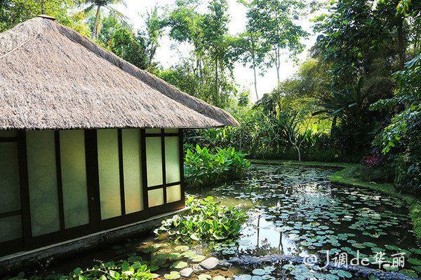 四季山妍的spa在一间茅草屋顶的小别墅里,周围环绕大片荷花池,漫步到
