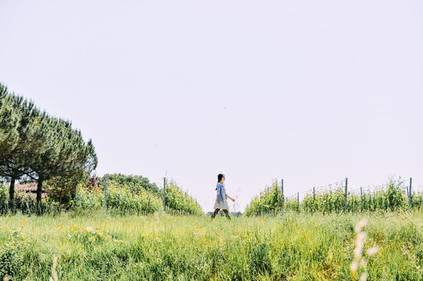 田野阳光下的男孩手绘简画