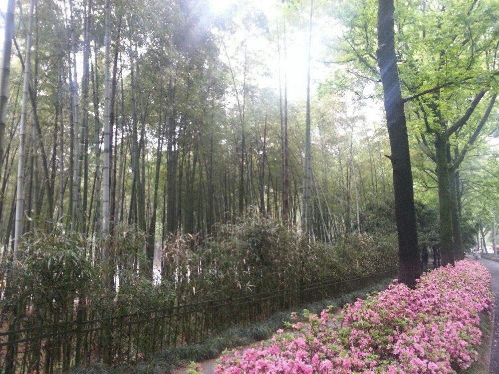今天的行程,龙井村,九溪十八涧,之江校区。从植物园坐公交直接来到龙井茶室,下车走走到达龙井村。继续往下走就是九溪十八涧,感觉原始森林的样子,小溪,茶树,森林,石头,让人回归大自然。不时看到学生写生春游,给我们增加了活力。漫长的道路因为有了这些风景变得轻松惬意。7公里多的十八涧轻松拿下,水流一直归入到了钱塘江。不是初一十五的日子没有潮可以看。但是大坝还是很宏伟的。继续走,到了之江校区,最美的浙大。校区依山而建,面对钱塘江。站在只剩一个法学院留在这里。古老的教学楼,幽深的道路,有时候也会让人害怕但美丽更多。情