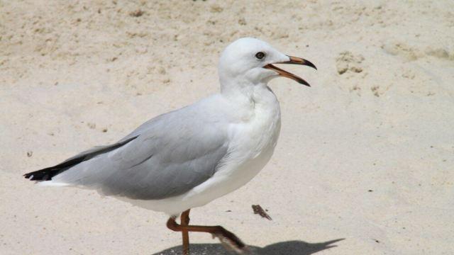 道格拉斯港野生动物栖息地门票