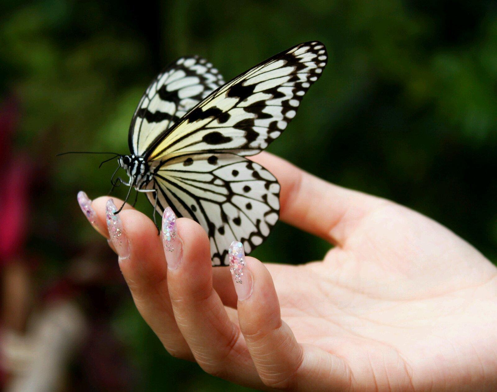 我们不免有很多感慨,来的时间完全不对,根本不是蝴蝶的活动时间嘛.