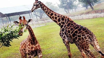 秦岭野生动物园门票