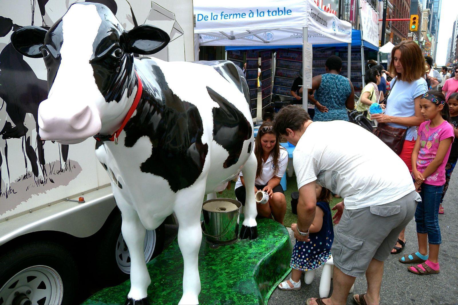 教导小孩子学习怎样挤牛奶