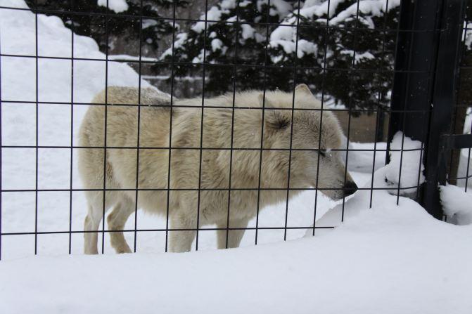 旭川——寒带动物的乐园