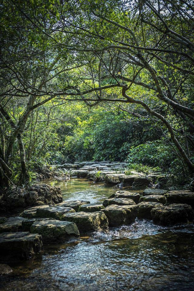 小七孔景区——水森林