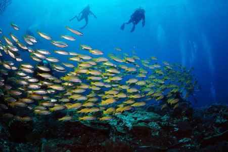壁纸 海底 海底世界 海洋馆 水族馆 桌面 451_300