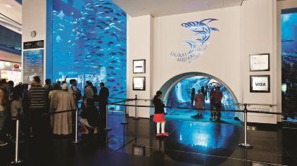 迪拜水族馆及水下动物园-1
