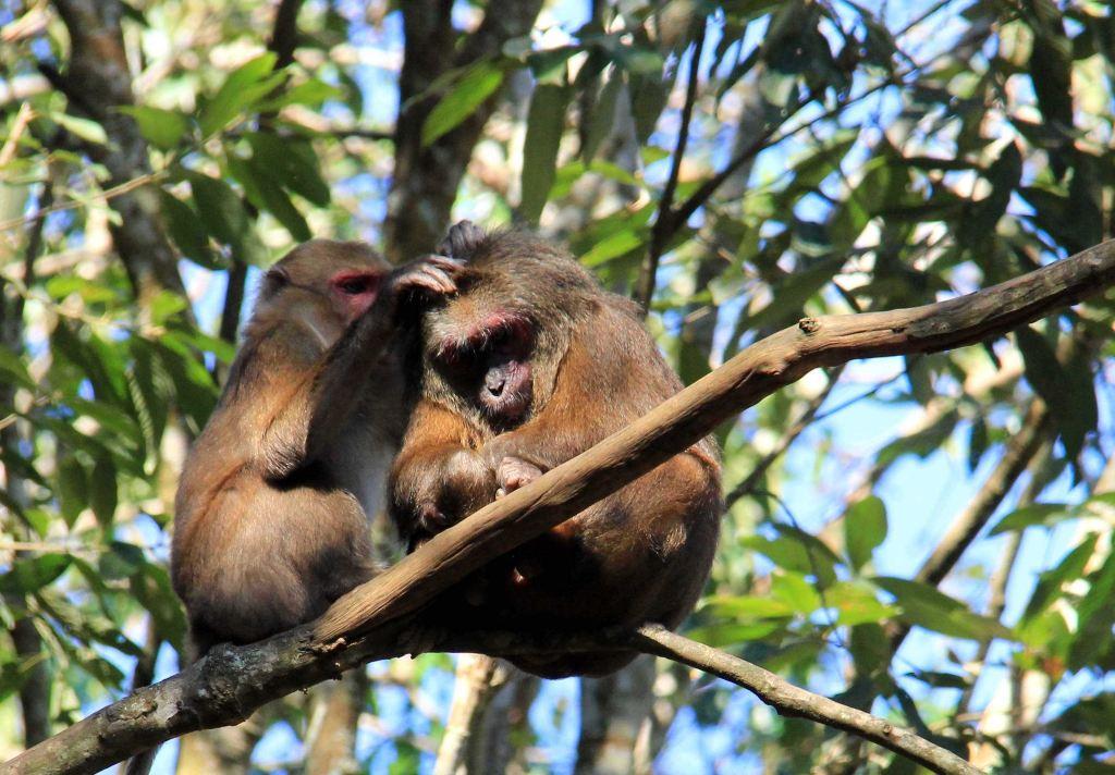 云南西双版纳行--住进热带雨林 聆听自然声音