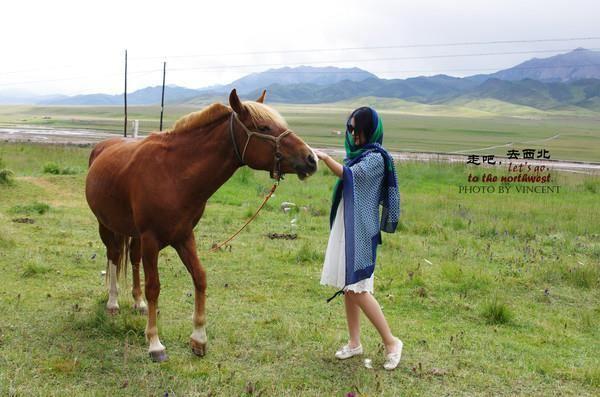 青海祁连山野生动物图片