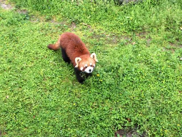 反正很好看 上海动物园