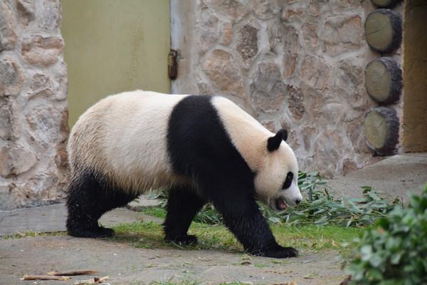携子游济南动物园