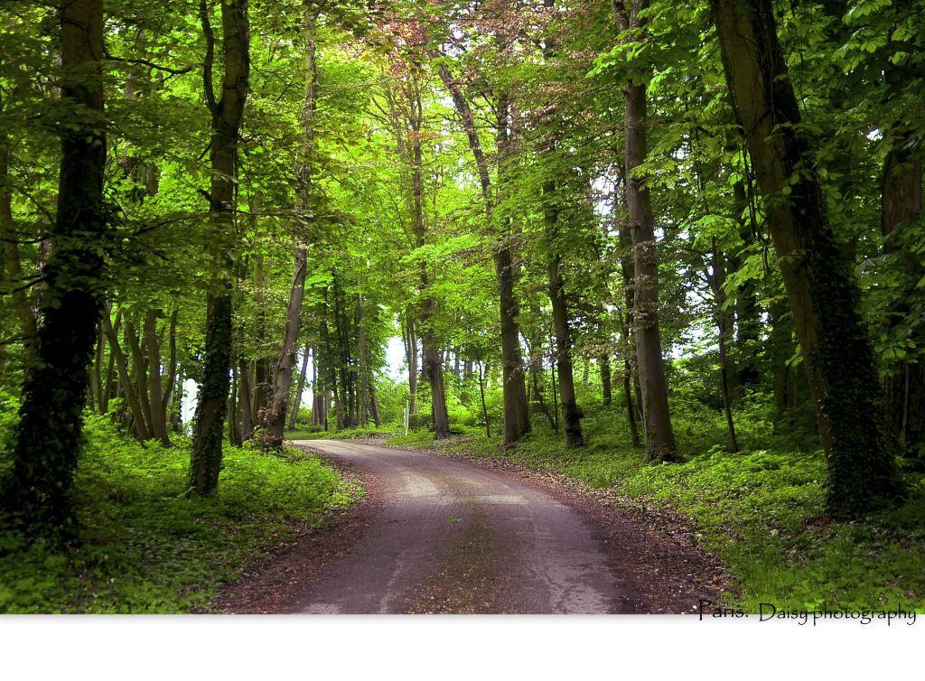 长长的森林小径,曲径通幽