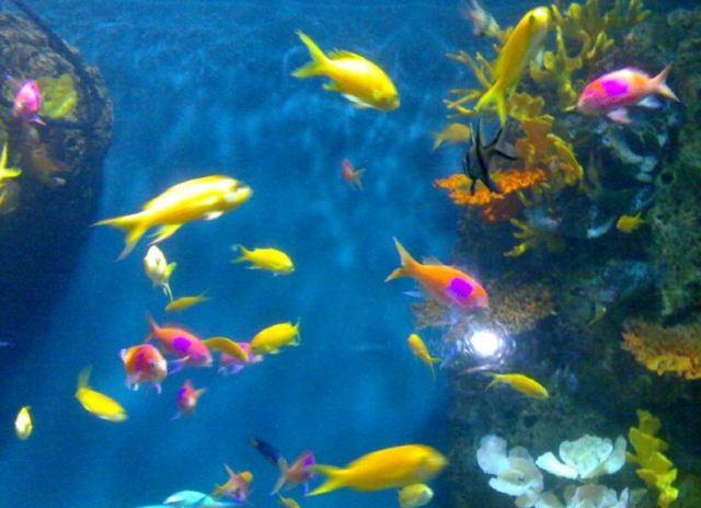 海洋里有各种各样的鱼
