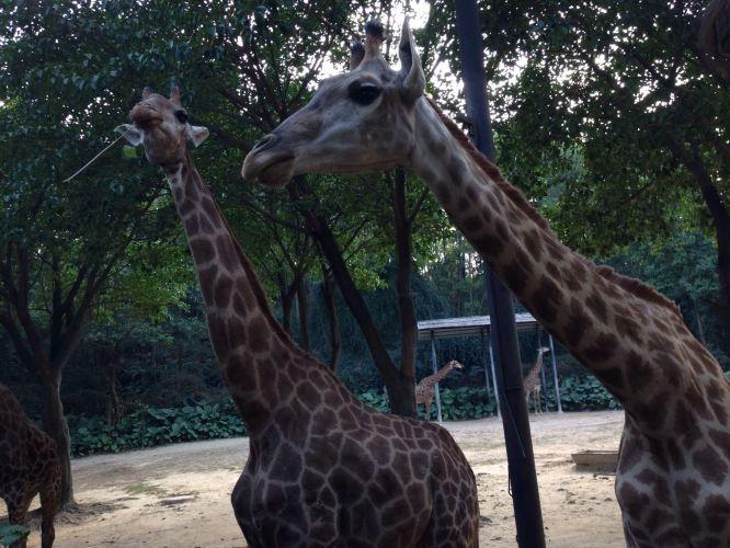 长隆野生动物园探秘
