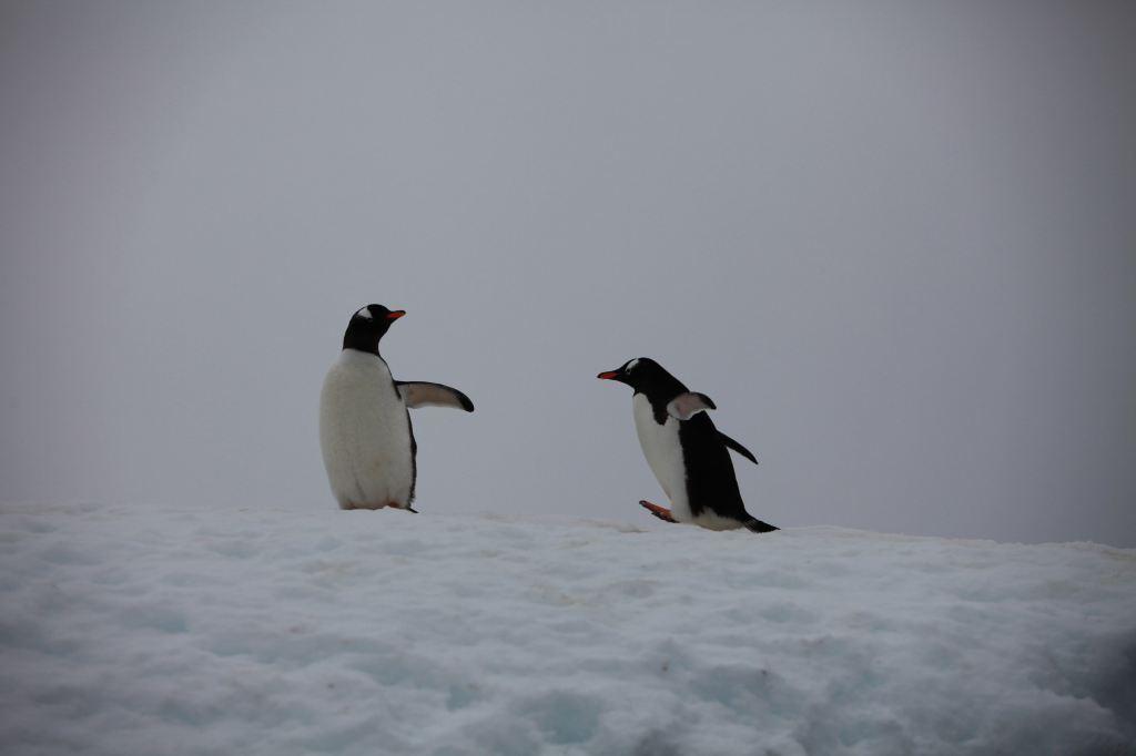 从别的地方来到南极的动物图片