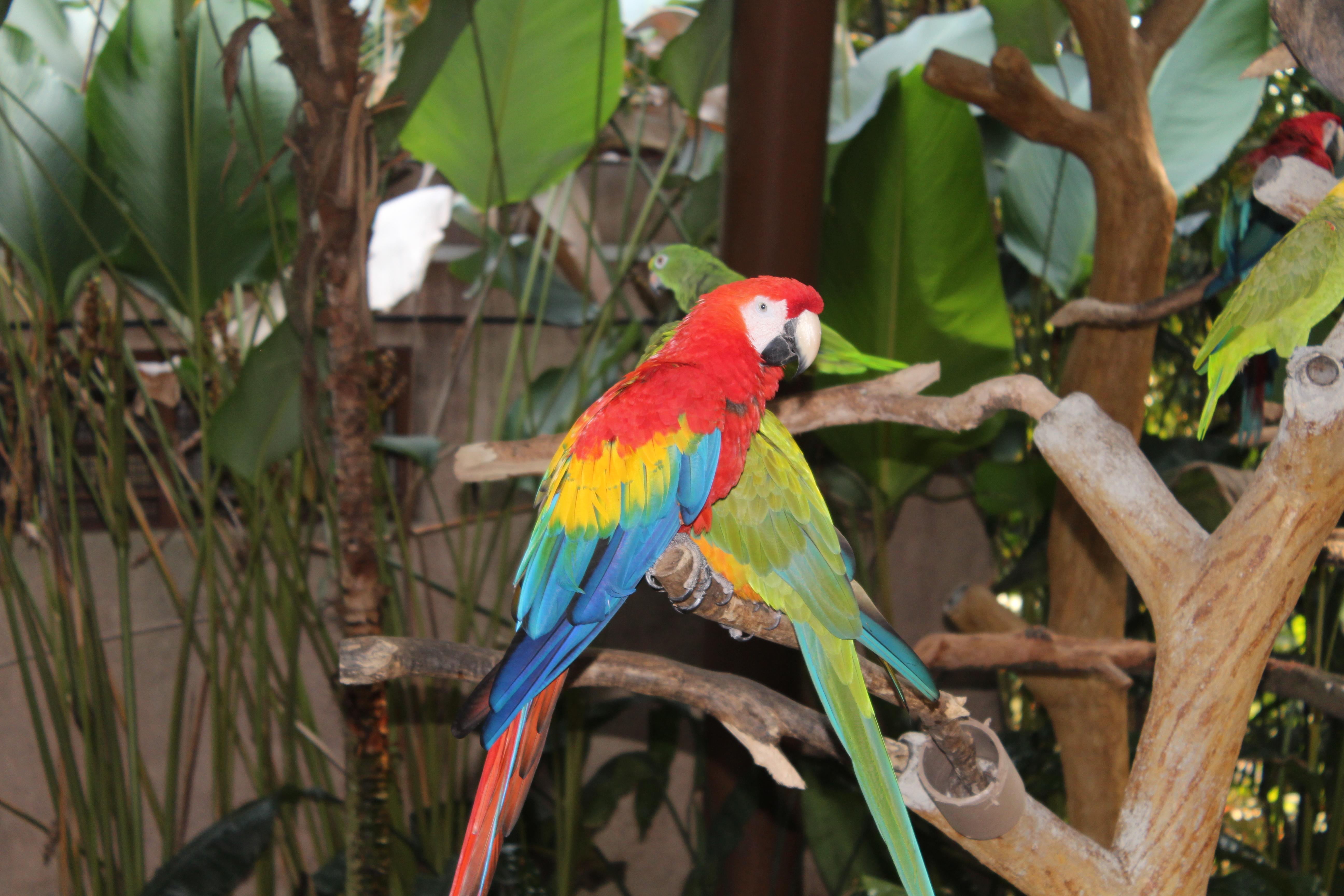 新加坡裕廊飞禽动物园