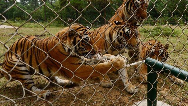 武汉动物园门票,武汉武汉动物园攻略/地址/图片/门票