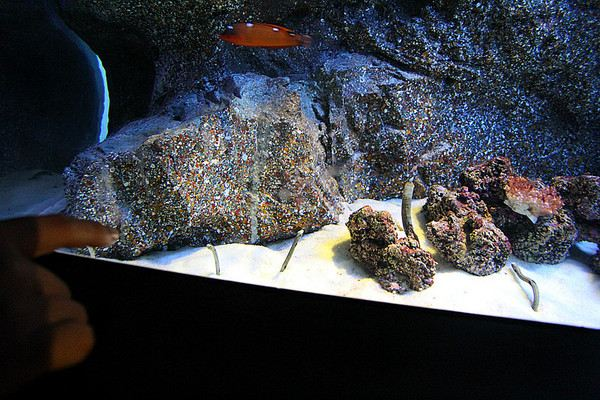 暹罗海洋世界 介绍上写得泰文,看不懂,好可爱的生物,竖着,一半埋在沙