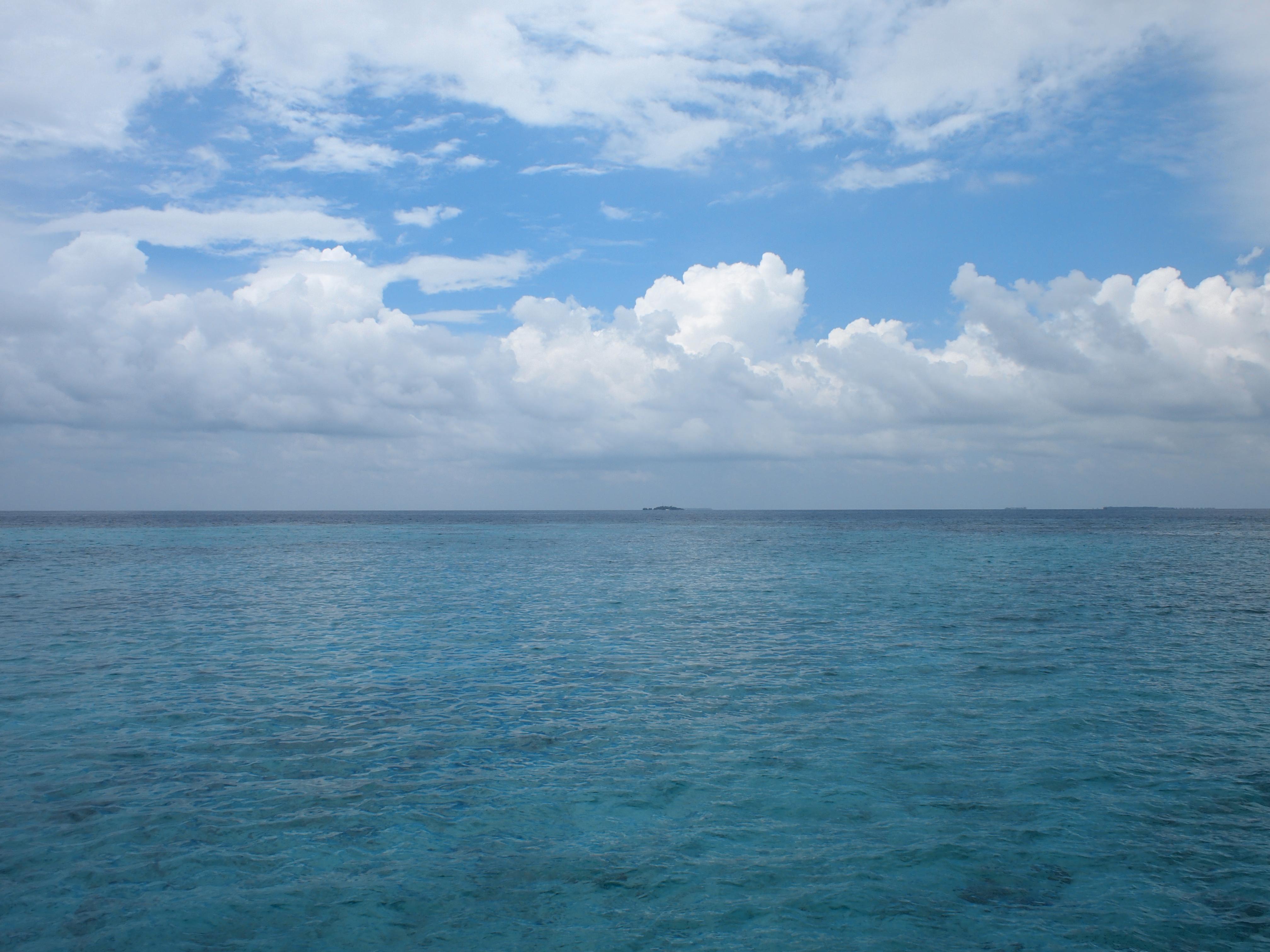 海边荷花风景图片
