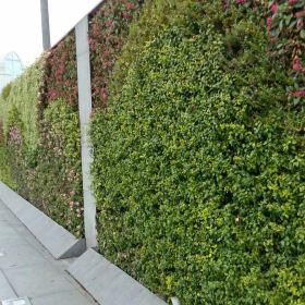 光台临江有32个半圆形花饰铁栏的 64盏庭柱式方灯.21个碗形花坛,