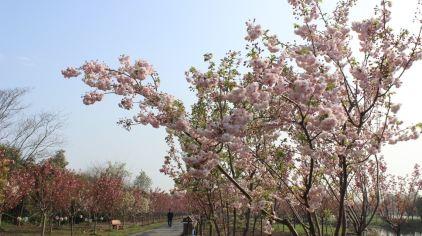 杭州海皇星生态乐园135704 (23)