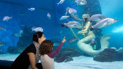 穆鲁拉巴海底世界  6