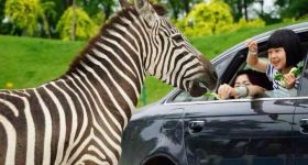 北京野生动物园自驾车票+双成人套票