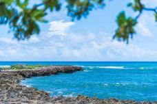 DSC_7919-绿龟海滩-夏威夷-任毅