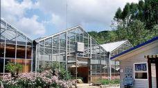 韩国自生植物园