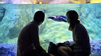 merlin-釜山水族馆 (20)