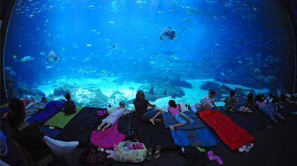 贵安海洋世界