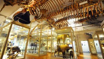 哈佛大学自然历史博物馆harvard museum of natural history 2-纵横