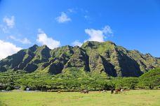 夏威夷-xiaoy216