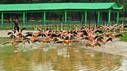 秦皇岛野生动物园 (10)