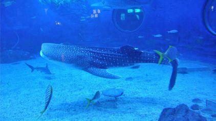 烟台海昌鲸鲨馆图片 (33)