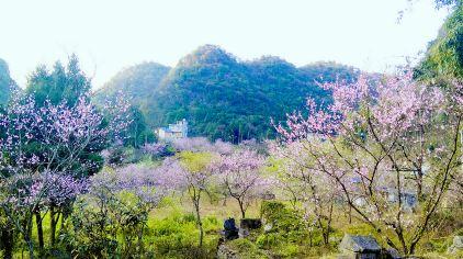 大石围桃花 (5)