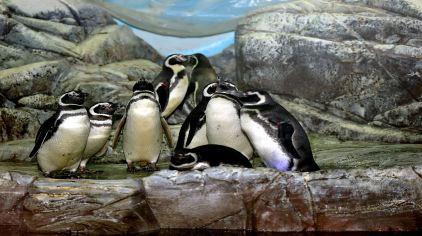 极地区--企鹅