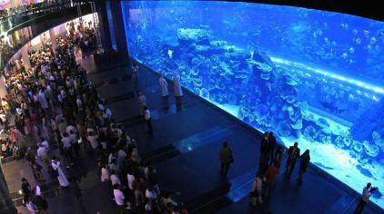 迪拜水族馆 (4)