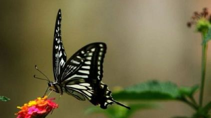 世界蝴蝶生态园 (4)