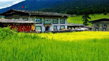 鲁朗花海:东巴才村