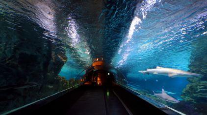 coex水族館-hana (1)