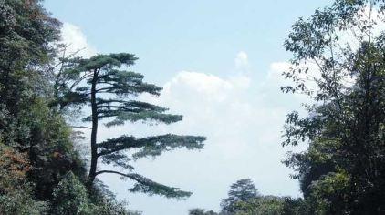 南岭国家森林公园3(新2016-11-11)