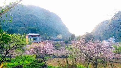 大石围桃花 (3)