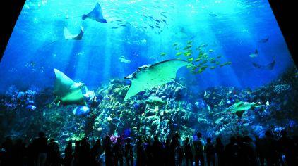 香港海洋公园2