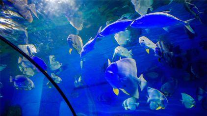 重庆欢乐海底世界1
