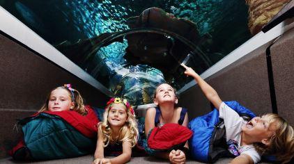 穆鲁拉巴海底世界水族馆13