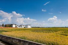 大理-龙龛稻田-龙龛村-大理-刘俊铖
