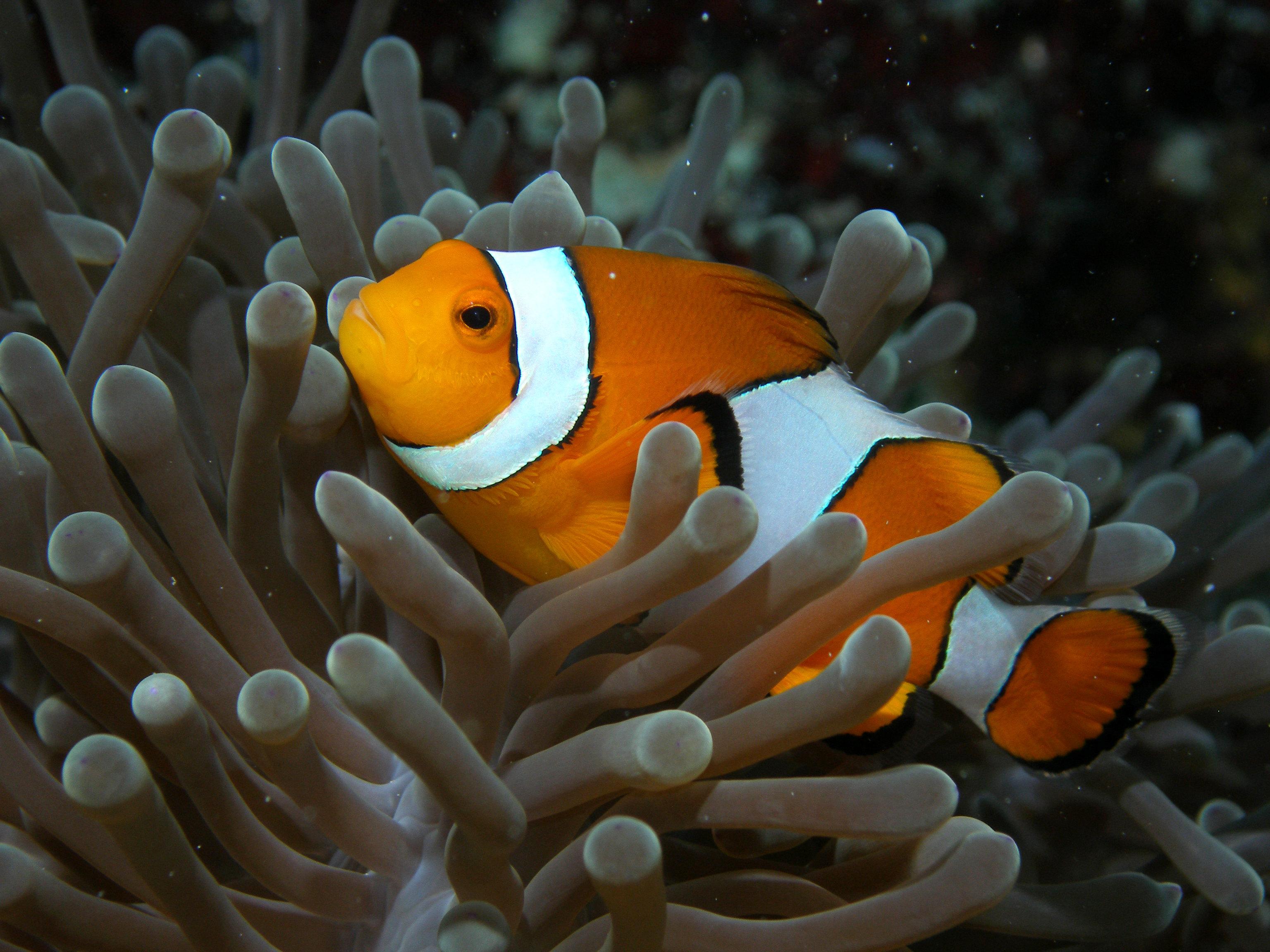 斯米蘭群島  Similan Islands   -4