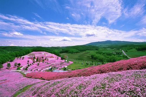 北海道花海圖,風景圖片